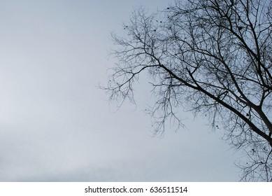 evening sky tree