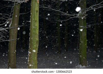 evening snowfall in the forest. Location: Germany, North Rhine-Westphalia, Borken