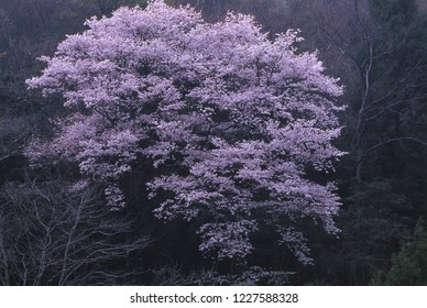 Evening in spring