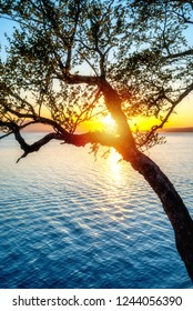 Evening sun behind tree above water