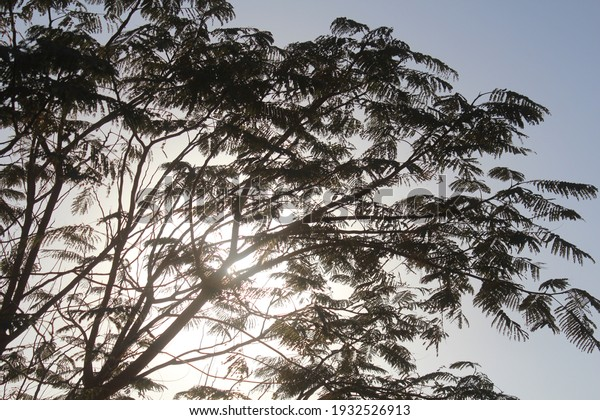 evening-sun-behind-tree-branches-600w-19