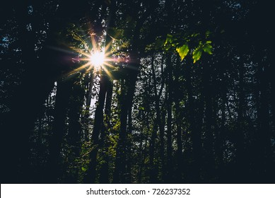 Evening sun breaks through the trees in the woods. Dark forest background