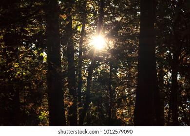 Evening sun in dark forest
