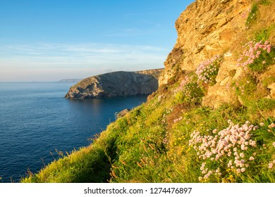 evening sun on the coast at north cliffs near portreath in cornwall, england, britain, uk.