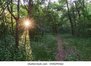 the evening sun shines through the trees of a natural forest at Warflether Sand (district Wesermarsch, Germany)