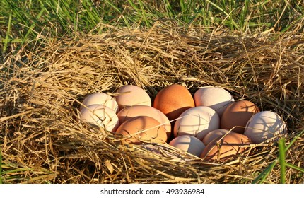 Evening Sunlight Glowing On Close Up Of A Nest Of All Natural Brown, Pink, And Speckled Chicken Eggs In Open, Grassy Field On A Farm In The Mountains Of South West Virginia