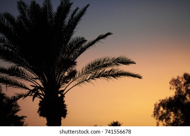 Evening sunset black palm silhouette on violet and orange sky. Background, wallpaper