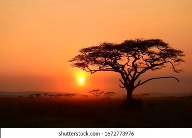 evening and sunset an serengeti, tanzania