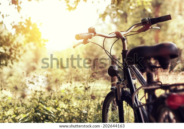 evening sunshine at wooden landscape and a standing bicycle next to them