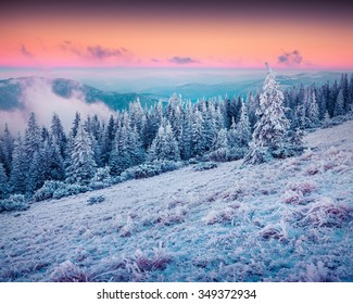 Evening twilight on mountain meadow covered with first frost in the Carpathian mountains.