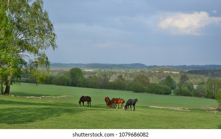 evening view of the countryside in South Bohemia, Czech Republic