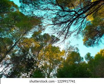 Evening walk through the park of Mljet, bright green mediterranean trees, rocky dry ground, golden sunshihe and blue sky, Adriatic coast, Croatia