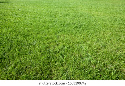evenly trimmed spring green grass