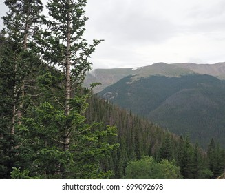 evergeen trees growing in mountains in Colorado