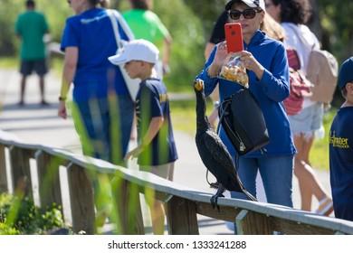 EVERGLADES NATIONAL PARK, FLORIDA / USA - February 22, 2019: Visitors enjoy the sights along the Anhinga Trail in Everglades National Park.