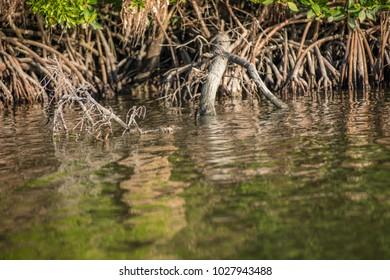 Everglades National Park in Homestead, Florida.