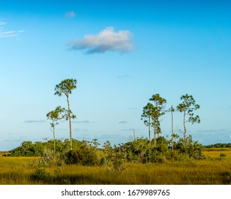 Everglades scene that looks like Africa