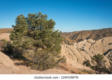 Evergreen bush grows on the rim of a desert canyon in the Mojave of California.