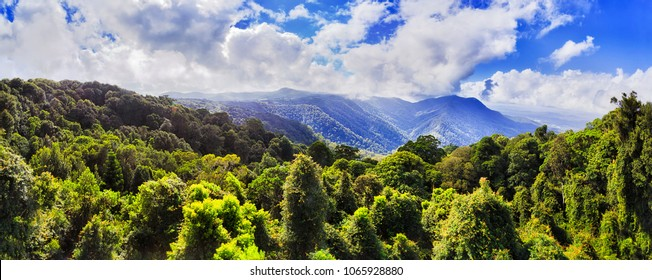 Evergreen canopy of temperate rainforest in Dorrigo national park from the main lookout near visitor centre towards scenic mountains and jungle covered valley.