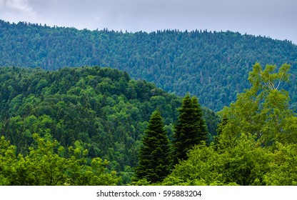 Evergreen Caucasus mountains