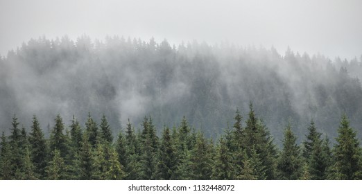 Evergreen firs, larches pines forest with fog and low clouds. Nostalgic look. Coniferous woods, Styrian mountains, Austria