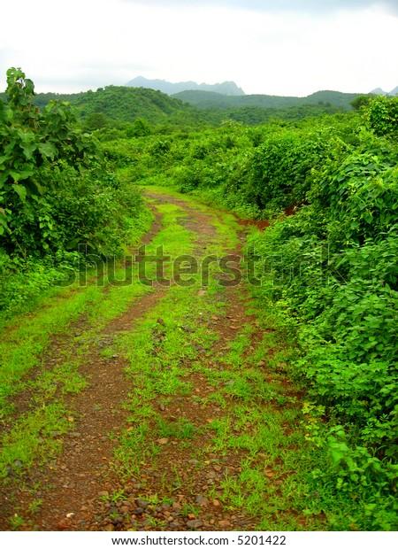 Evergreen Path