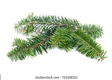 Evergreen pine tree branch decoration on white background