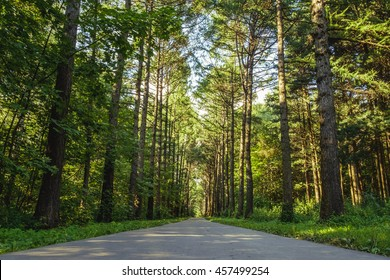 Evergreen pine tree forest with asphalt road in sunny day light. Natural woods landscape photography. Green forest with empty walkway. Sunshine in forest trees. Path between peaceful forest trees.