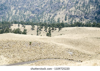 Evergreen pine tree forest and dry yellow grass in mountains