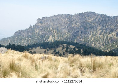 Evergreen pine tree forest and dry yellow grass in mountains under blue clear sky