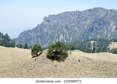 Evergreen pine trees and dry grass in mountains under blue sky