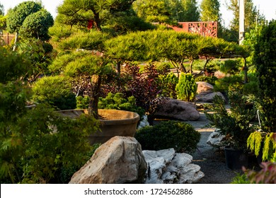 evergreen plantings in the garden center, plants in tubs for landscaping
