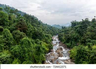 Evergreen Rain Forest and Stream from Thusharagiri, Kerala, India