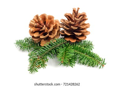 evergreen tree Christmas pine cones with branch on a white background. Decorate element