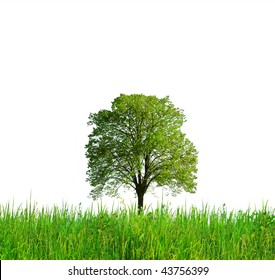 Evergreen - tree and grass