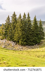 Evergreen trees on a rocky hill