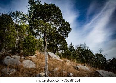 Evergreens along a rocky hill. Wade Mountain, Devil's Racetrack Trail. Huntsville, Alabama.