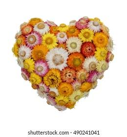 Everlasting Flower Heart