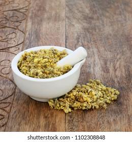 Everlasting herb flowers used in alternative herbal medicine as a diuretic, is anti bacterial, anti viral, anti inflammatory and has anti ageing properties. Helichrysum arenarium.