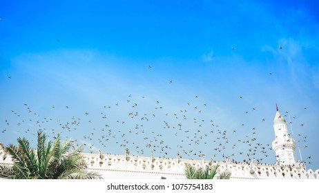 Everyday sight in the dome of the Quba Mosque, birds flying and perched on the tops of the dome.