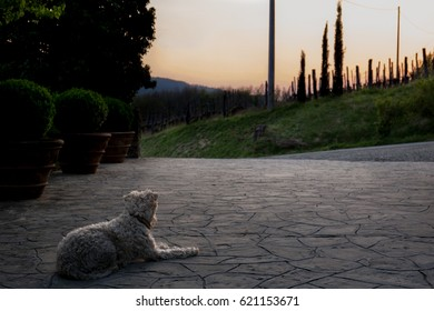 Everyone enjoys a beautiful sunset. Sun is setting over an Italian vineyard