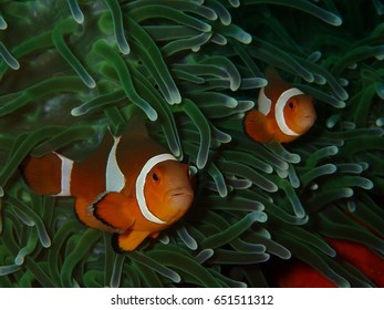 Everyone favorite sea creatures! Underwater marine life.