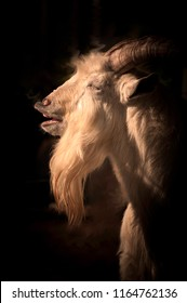 Evil looking goat with dark smokey background