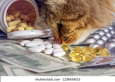 Examination of drugs - quality control carried by the cat