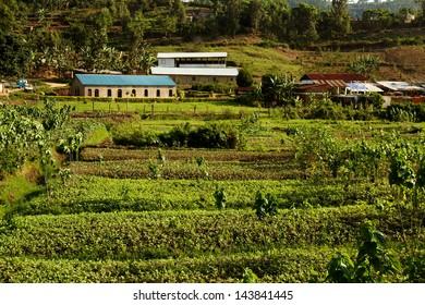 An example of African agriculture in Kibuye, Rwanda