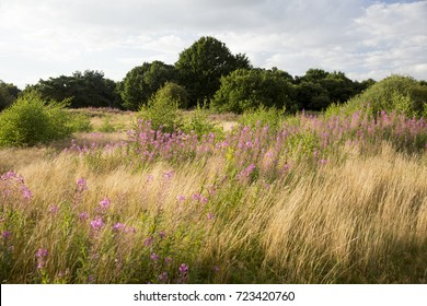 Example of Breckland grassland in late Autumn, Norfolk, UK