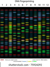 An example of DNA fingerprinting, 10 individuals are tested for 6 loci, scientifically accurate