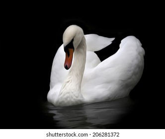 Excellent portrait of whooping swan on water, isolated on black background. White swan with orange beak in twilight. Wild beauty of a beautiful web foot bird. Amazing picture in oil painting style.