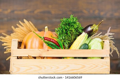 Excellent quality vegetables. Grocery shop concept. Delivery service fresh vegetables from farm. Buy fresh homegrown vegetables. Just from garden. Box or basket harvest vegetables wooden background.