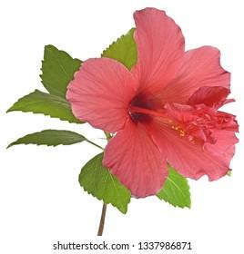 Internal Flower Images Stock Photos Vectors Shutterstock